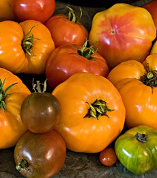 Photo from www.whiteflowerfarm.com